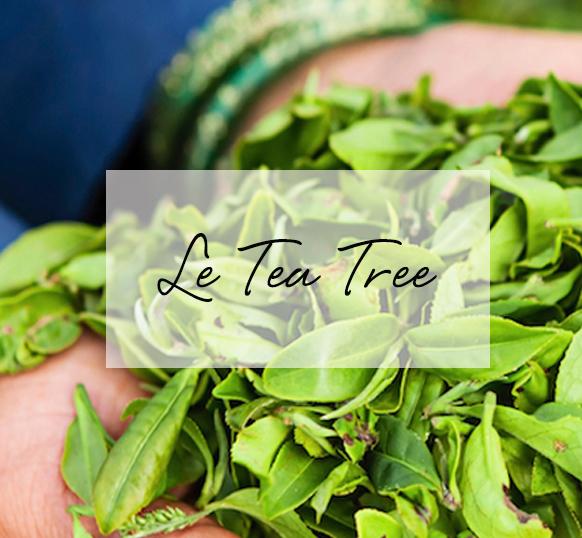 tea tree cosmetique bio